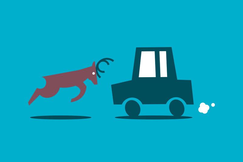Cómo cubre tu seguro de coche una colisión contra un animal