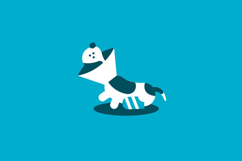 El seguro del coche también puede cubrir a tu mascota en caso de accidente