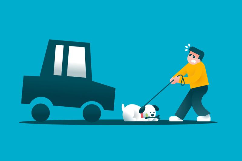 Cómo responde tu seguro si atropellas a un perro